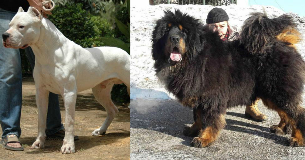 ds the World's Most Expensive Dogs